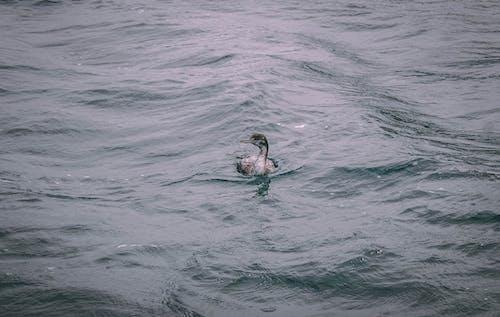 Foto stok gratis alam, gelombang, kapal laut, laut