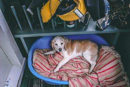 Foto stok gratis anjing, anjing tidur, anjing tua, tempat tidur