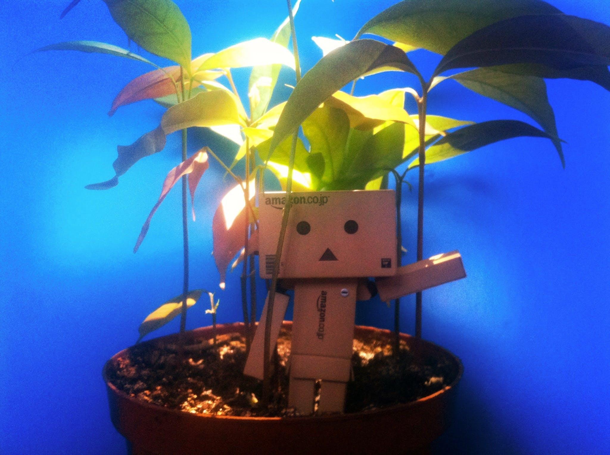 Free stock photo of sunny, sun, plant, plants
