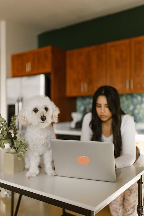 Darmowe zdjęcie z galerii z kobieta, laptop, pies