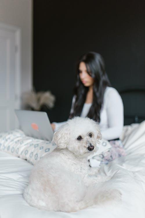 Photos gratuites de animal de compagnie, animal domestique, canin