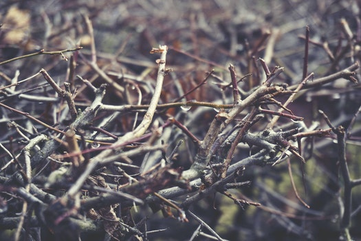 Twigs in a Forest