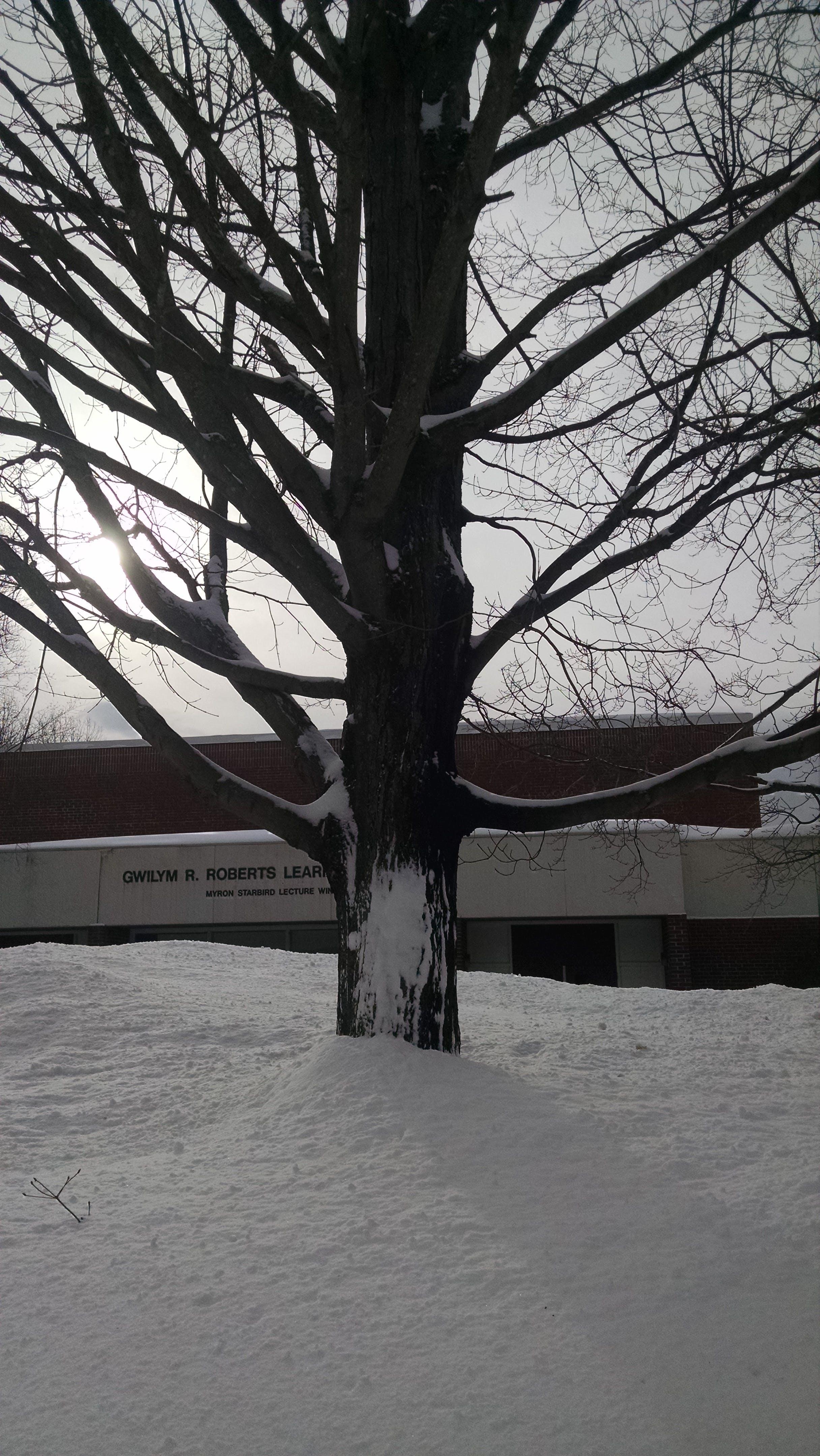 Free stock photo of snow, winter, tree