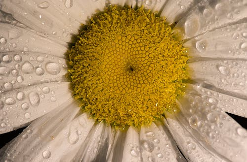 Close Up Shot of a Flower
