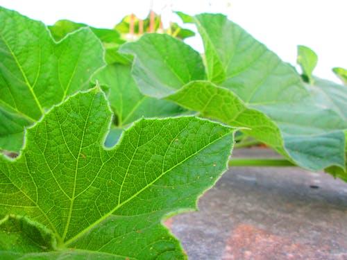 yeşil içeren Ücretsiz stok fotoğraf