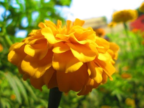 portakal rengi çiçek içeren Ücretsiz stok fotoğraf