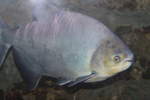 Základová fotografie zdarma na téma ryba