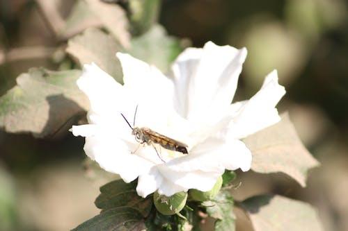 Základová fotografie zdarma na téma bílá květina