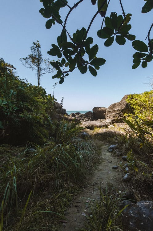 Green Trees on Brown Rocky Shore