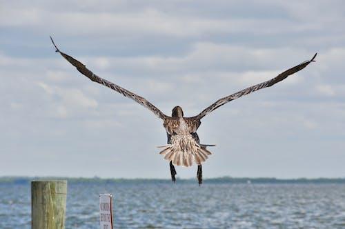 Základová fotografie zdarma na téma mořský pták