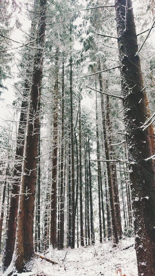 Kostenloses Stock Foto zu bäume, frost, holz, schnee