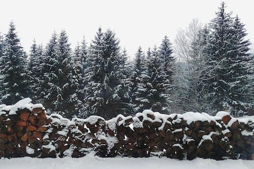 Fotos de stock gratuitas de arboles, bosque, conífera, cubierto de nieve