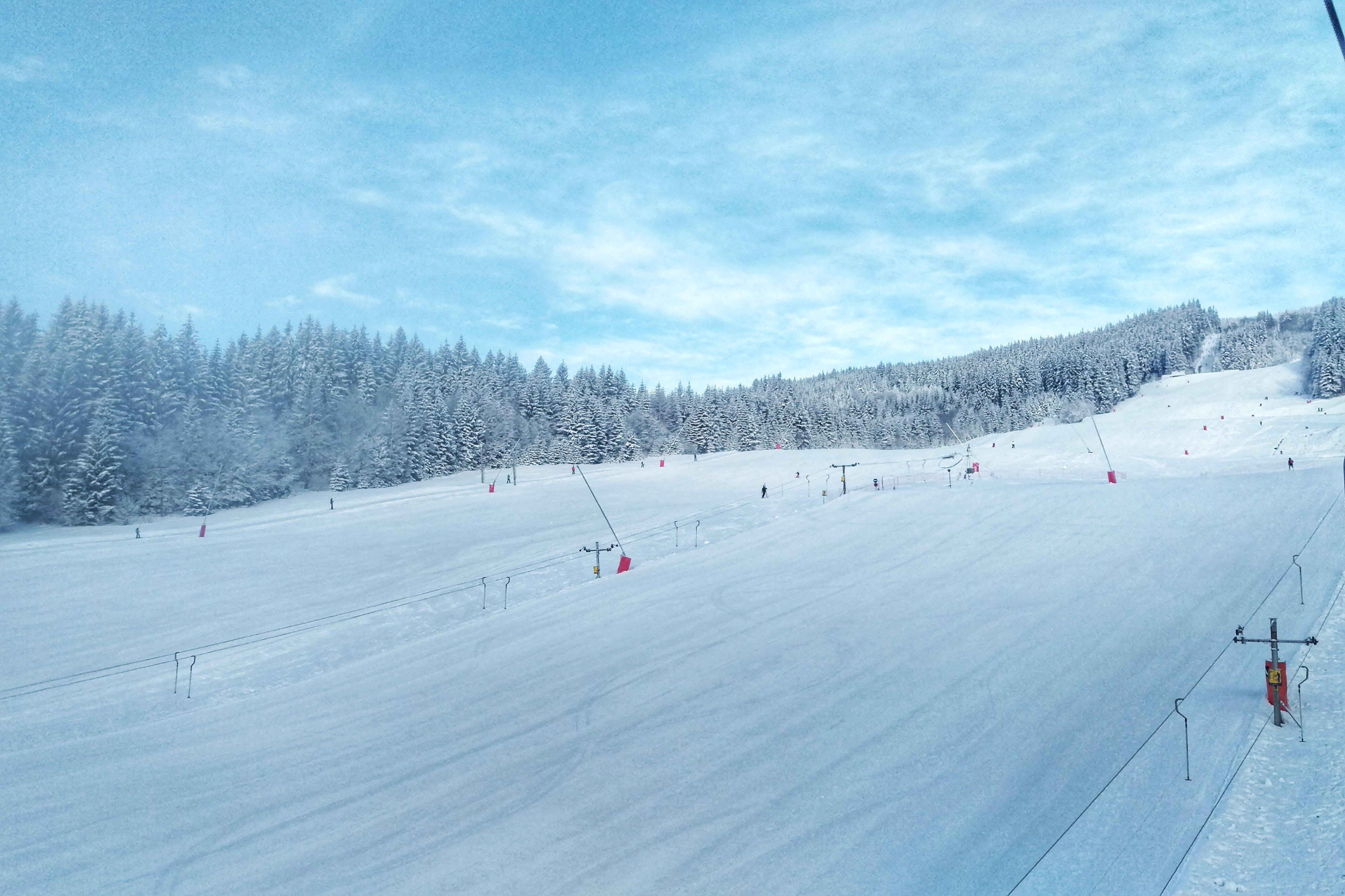 Fotos de stock gratuitas de arboles, bosque, cielo azul, esquiando