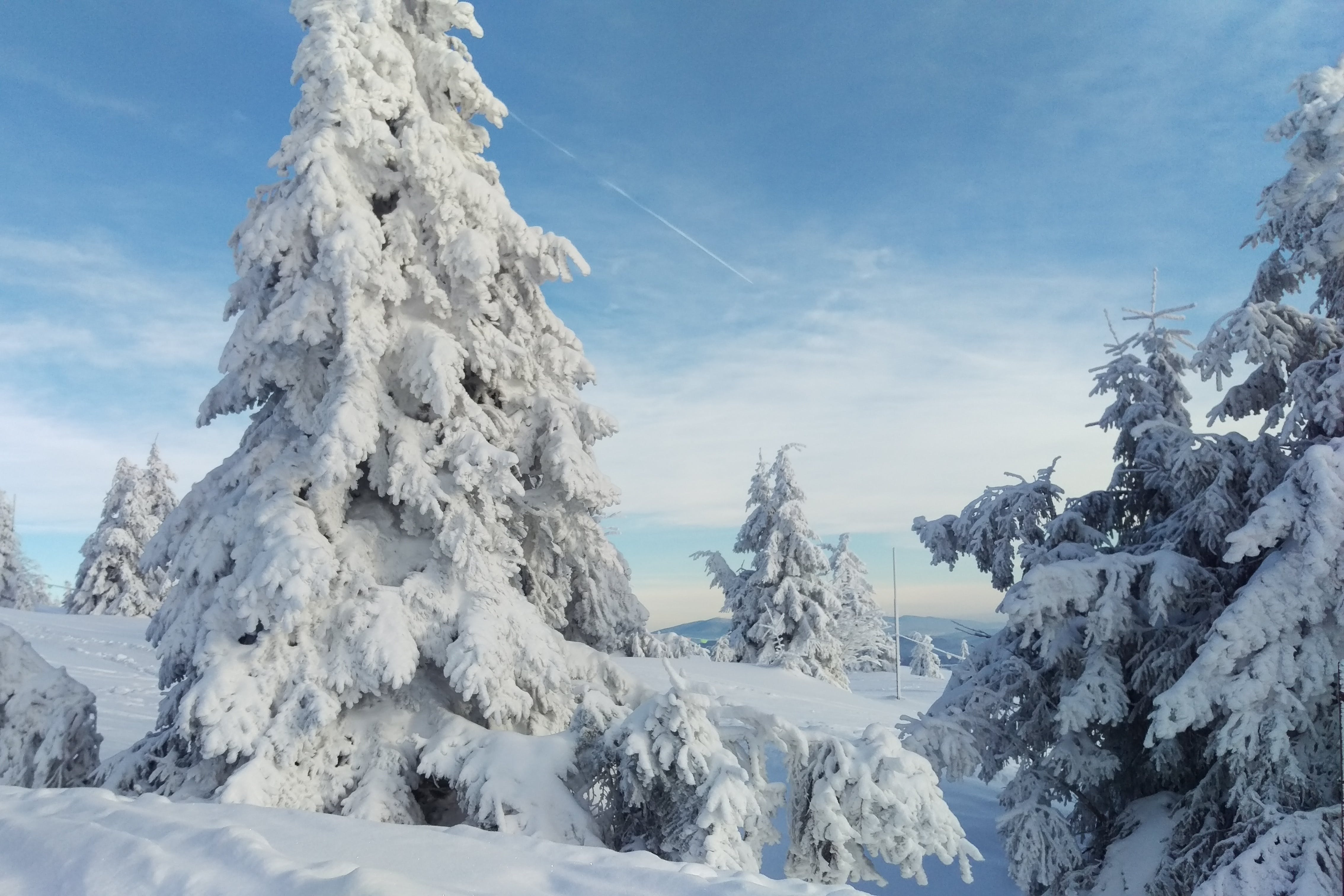Fotos de stock gratuitas de arboles, azul, blanco, cielo azul
