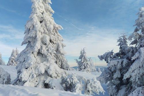 Kostenloses Stock Foto zu bäume, blau, blauer himmel, schneebedeckt