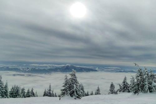 Kostenloses Stock Foto zu bäume, berge, blau, schnee