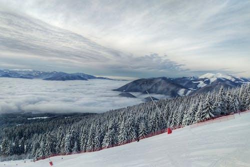 คลังภาพถ่ายฟรี ของ การเล่นสกี, ขาว, ต้นไม้, ท้องฟ้า
