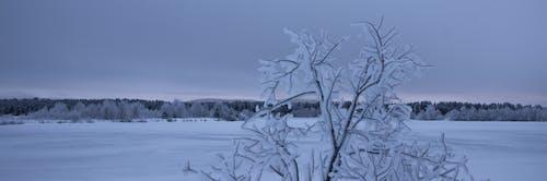 Gratis arkivbilde med Finland, frossen innsjø, frosset tre, landskap