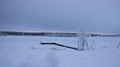 Gratis arkivbilde med Finland, frossen innsjø, landskap, lappland