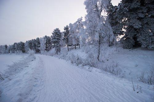 Gratis arkivbilde med frosne trær, lappland, snøvej, vinter