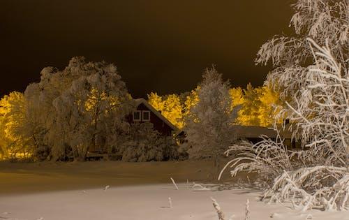 fince evi, gece, kar, lapland içeren Ücretsiz stok fotoğraf