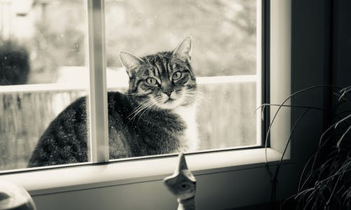 Grayscale Photography of Cat Outside Glass Sliding Window