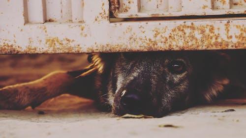 Darmowe zdjęcie z galerii z brama, futro, oko, pies