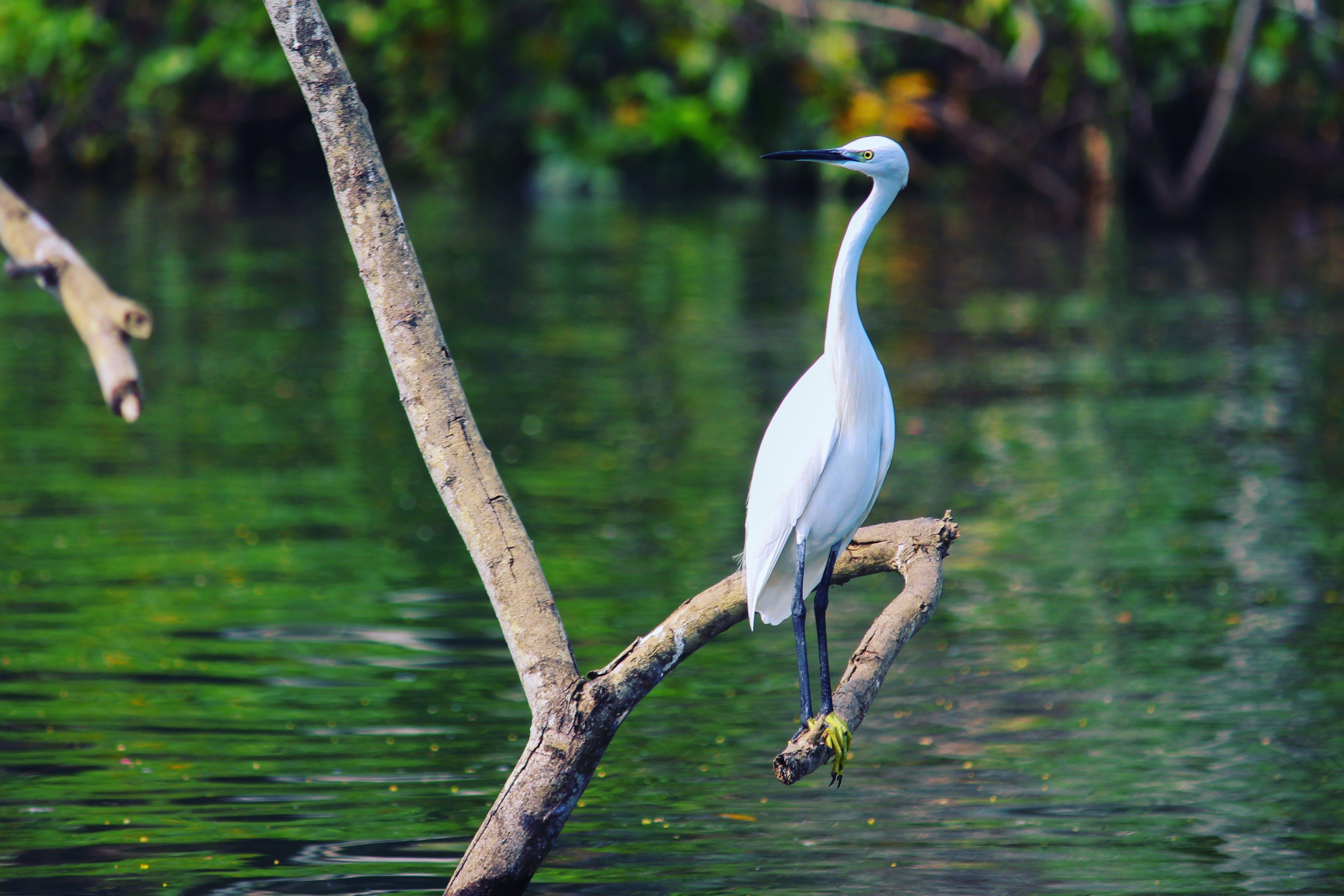 Free stock photo of bird, water, wildlife, wildlife photography