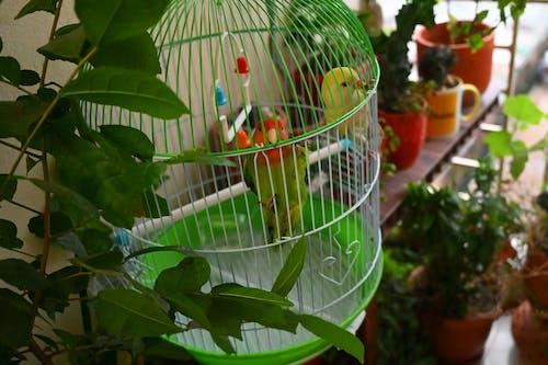 Foto profissional grátis de passarinhos, pássaro, pássaros internos