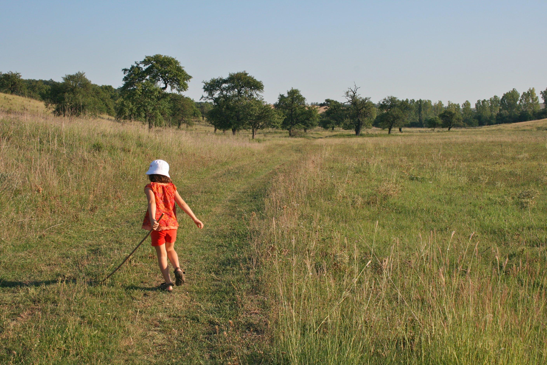 Free stock photo of child, grass, trees