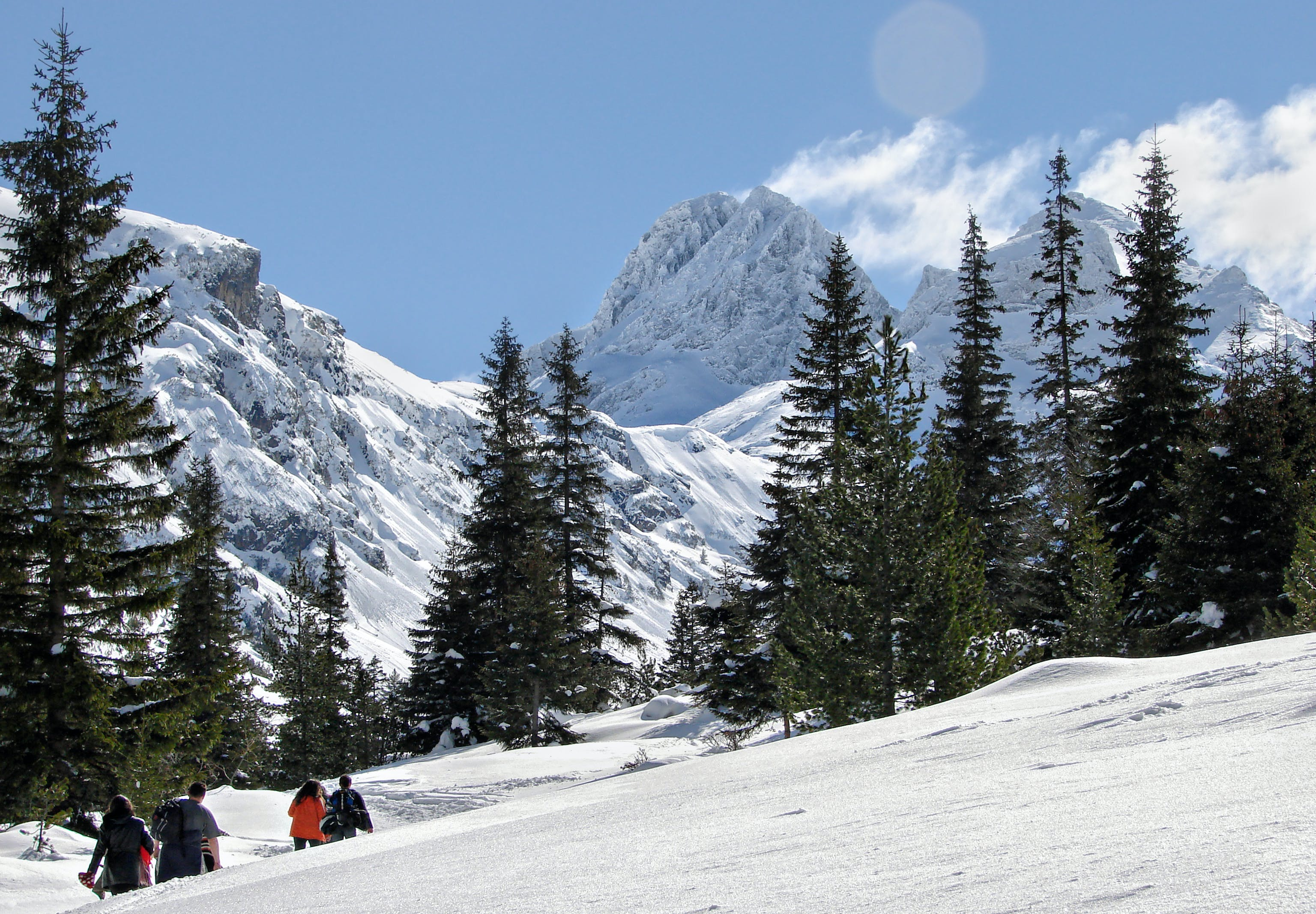 Kostenloses Stock Foto zu berg, berggipfel, bergwandern, kiefern