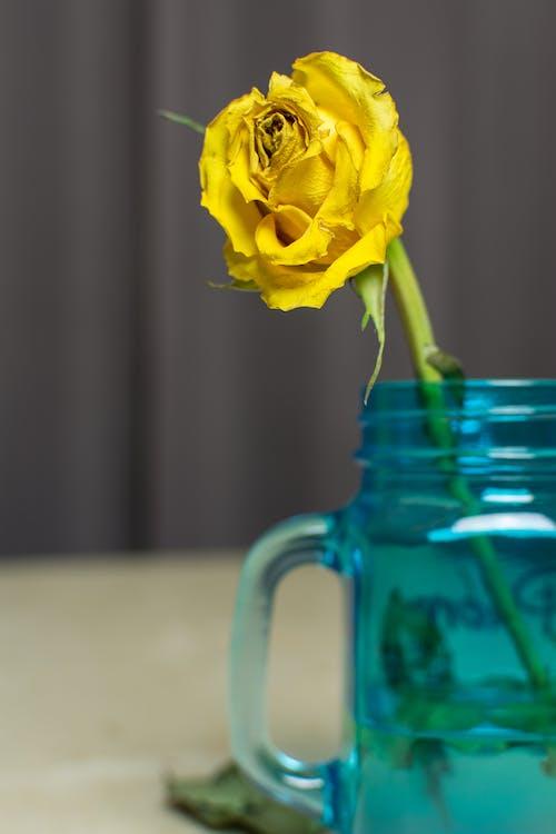 Безкоштовне стокове фото на тему «жовтий, квітка, Квітковий»