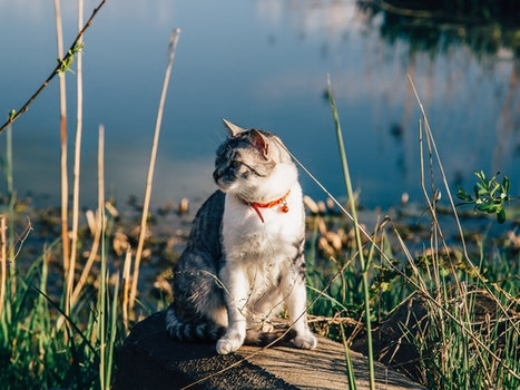 Free stock photo of sunny, red, water, animal