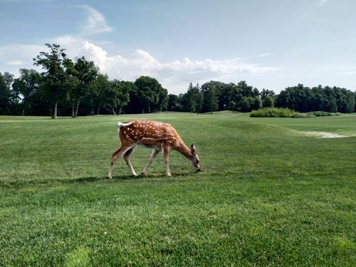 Free stock photo of 4k wallpaper, beatiful landscape, deer