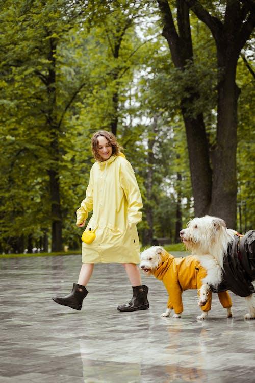 Fotobanka sbezplatnými fotkami na tému chôdza, domáce zviera, exteriéry