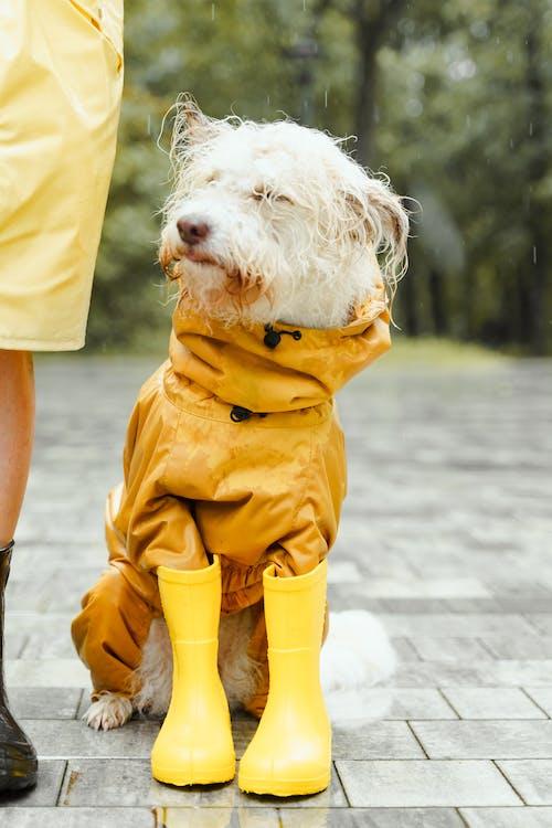 Δωρεάν στοκ φωτογραφιών με βρέχω, βροχή, θολό φόντο