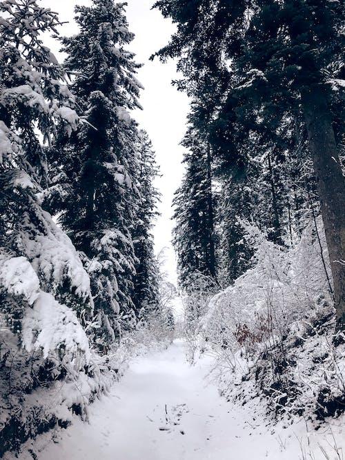 Foto profissional grátis de estado de espírito, floresta, inverno, neve