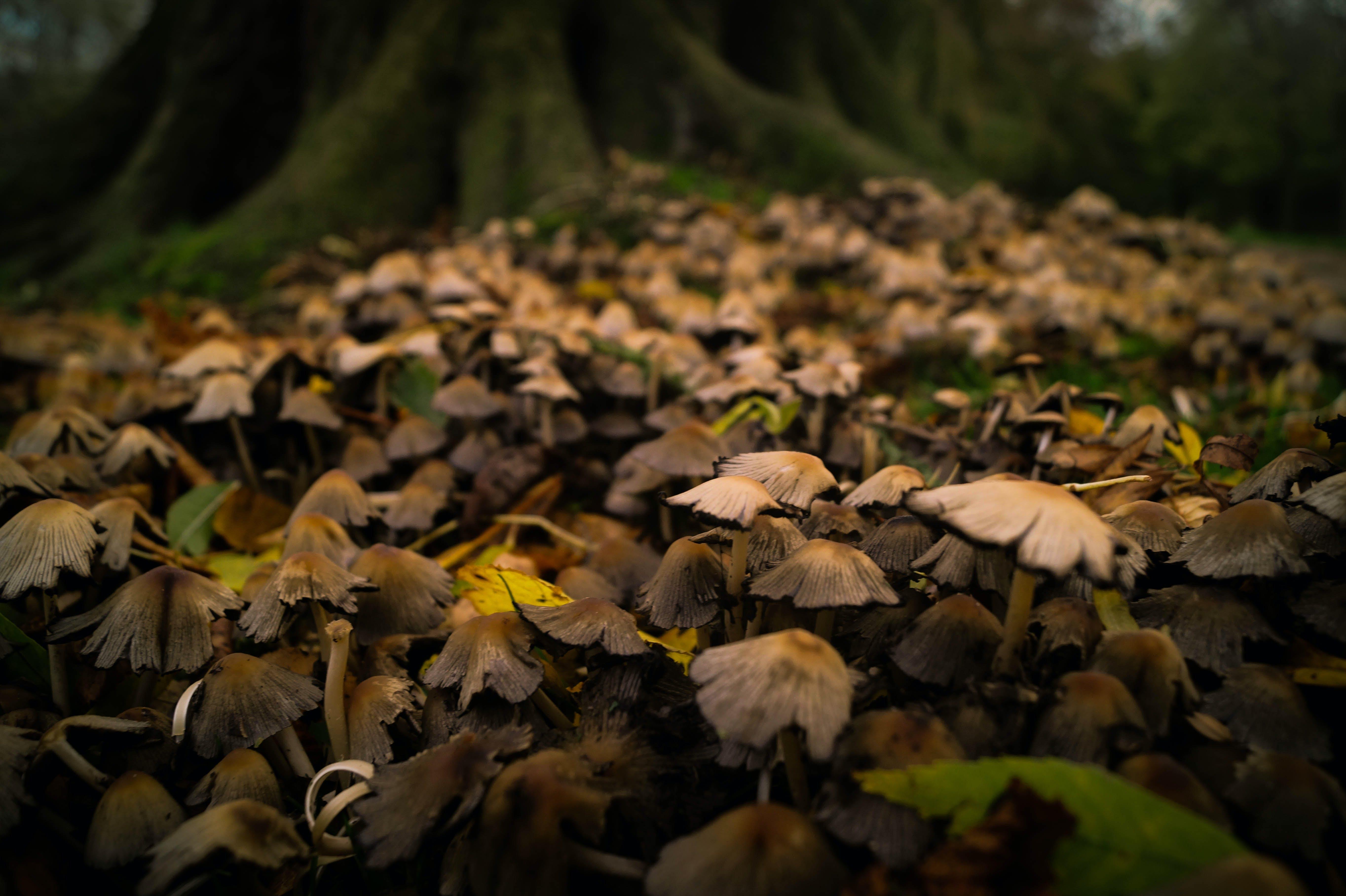 Brown Mushroom Field Near Tree