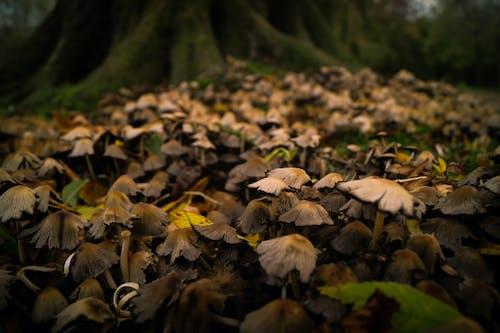Imagine de stoc gratuită din ciuperci, codru, fungi, lemn