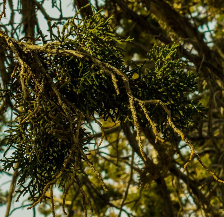 cây, chi nhánh, màu xanh lá
