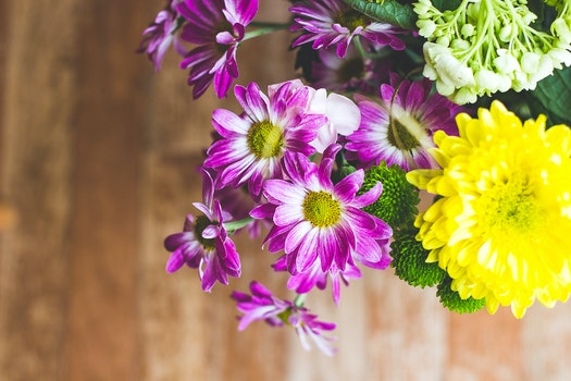 Free stock photo of flowers, yellow, colorful, happy