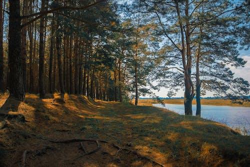 Безкоштовне стокове фото на тему «вода, Денне світло, дерева, краєвид»