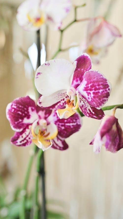 Close-Up Shot of a Purple Flower