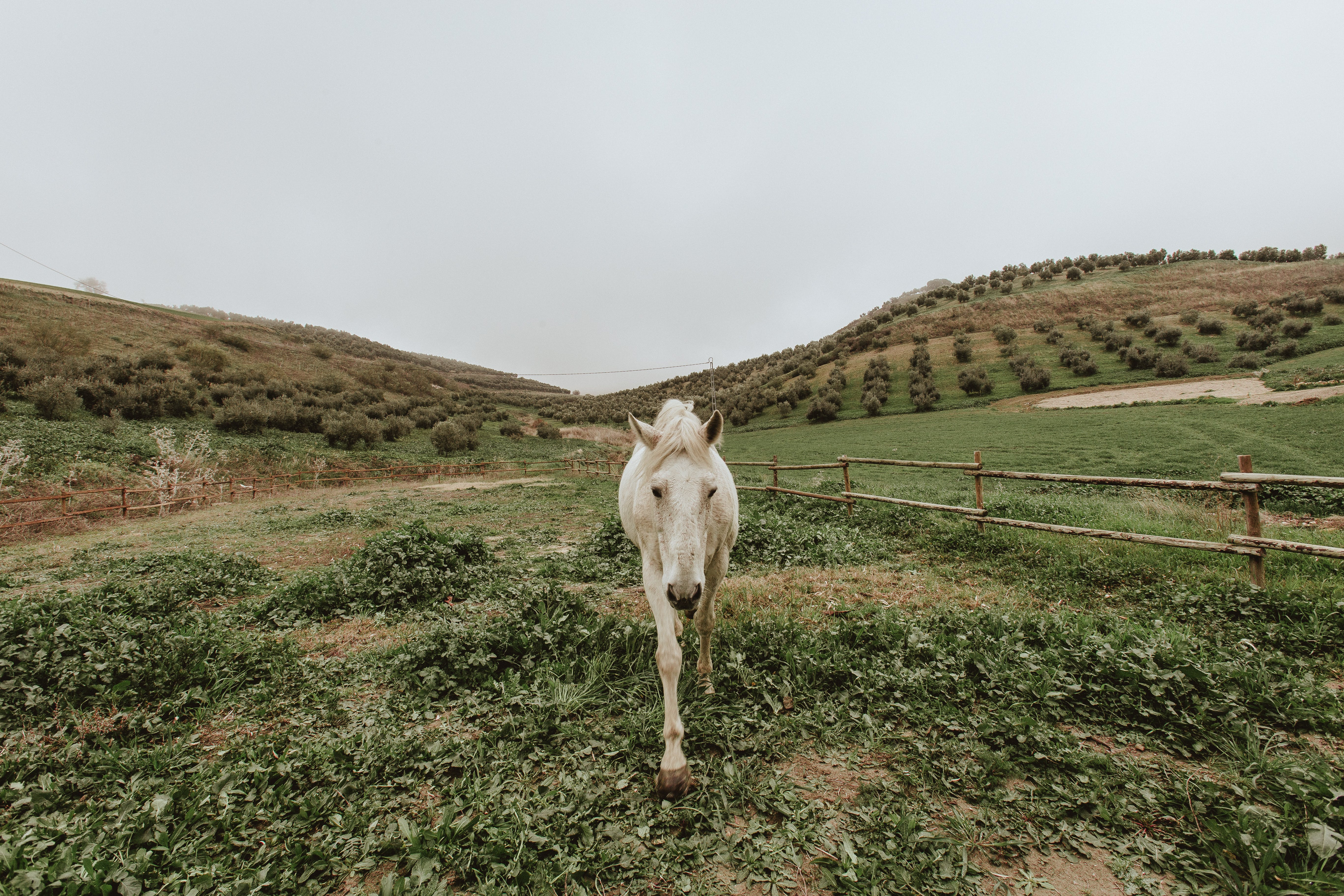 White Horse Standing on Green Grass Field