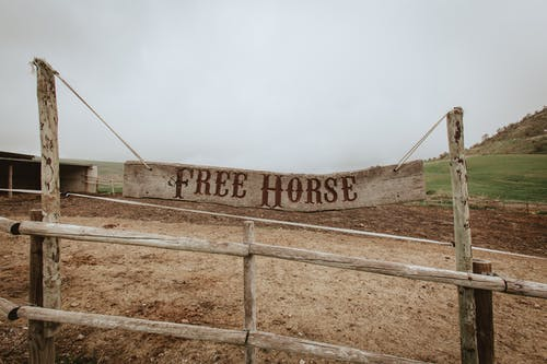 Free stock photo of country, free, horse, name