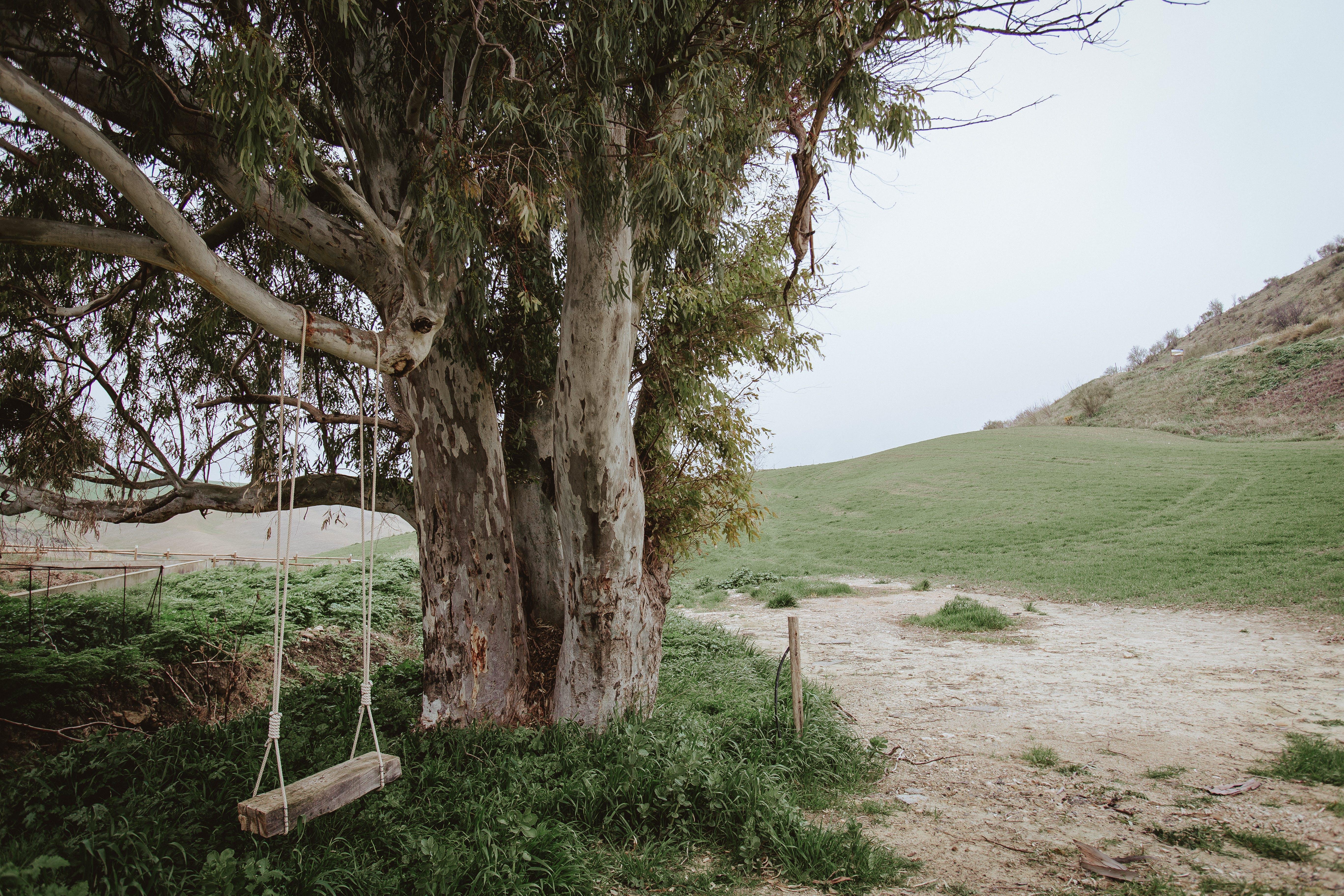 Foto d'estoc gratuïta de arbre, balancejar, llum del dia