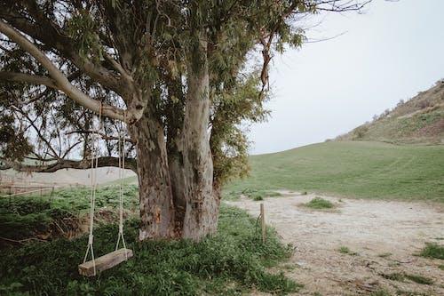 Fotos de stock gratuitas de árbol, balancearse, luz de día