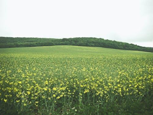 açık hava, arazi, bitki örtüsü içeren Ücretsiz stok fotoğraf