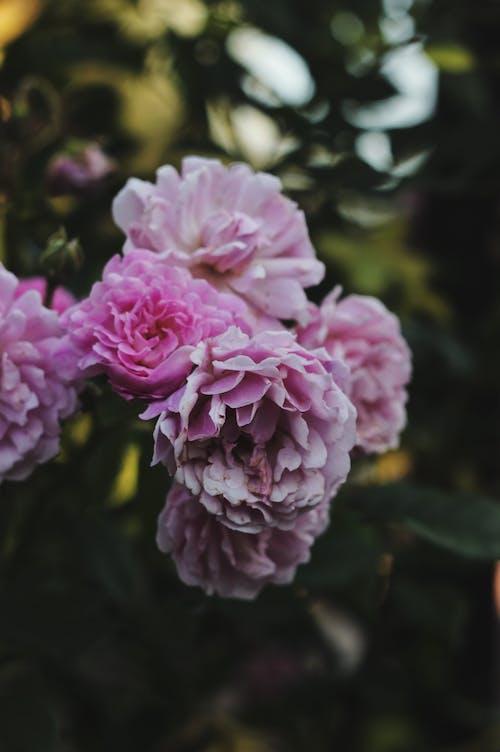 Foto profissional grátis de abundância, ao ar livre, arbusto