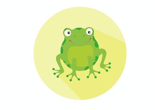 Free stock photo of amphibian, animal, animal photography